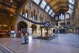 © Natural History Museum
