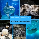 Nine Reasons you should visit the Lisbon Oceanário