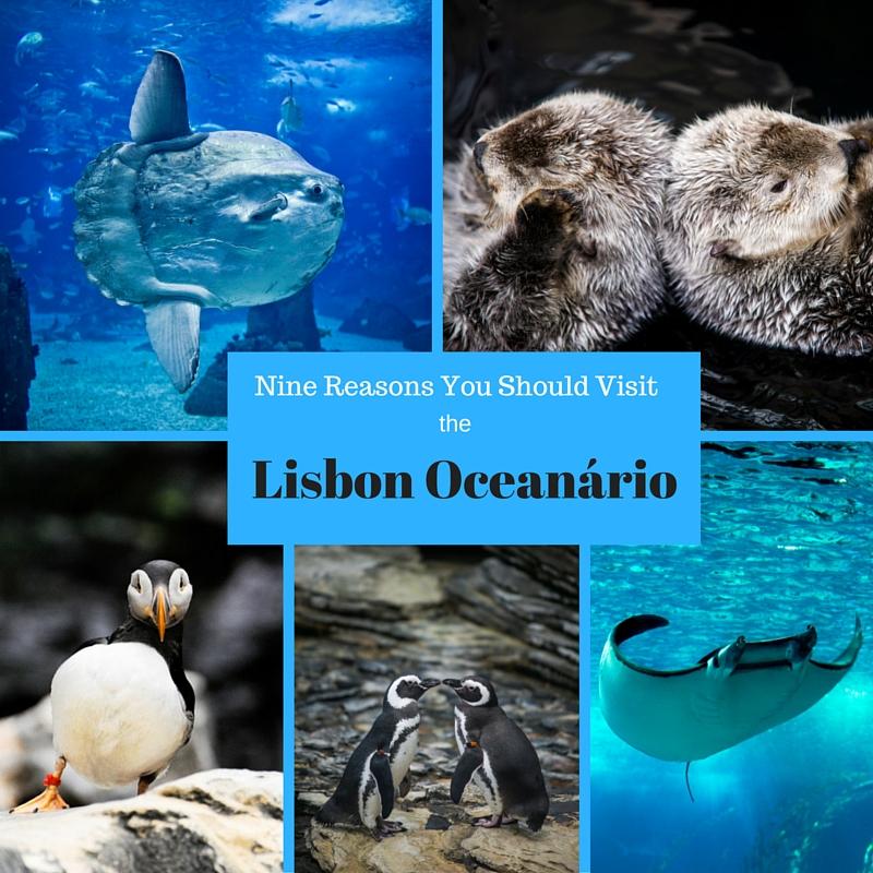 Nine Reasons you should visit the Lisbon Oceanário